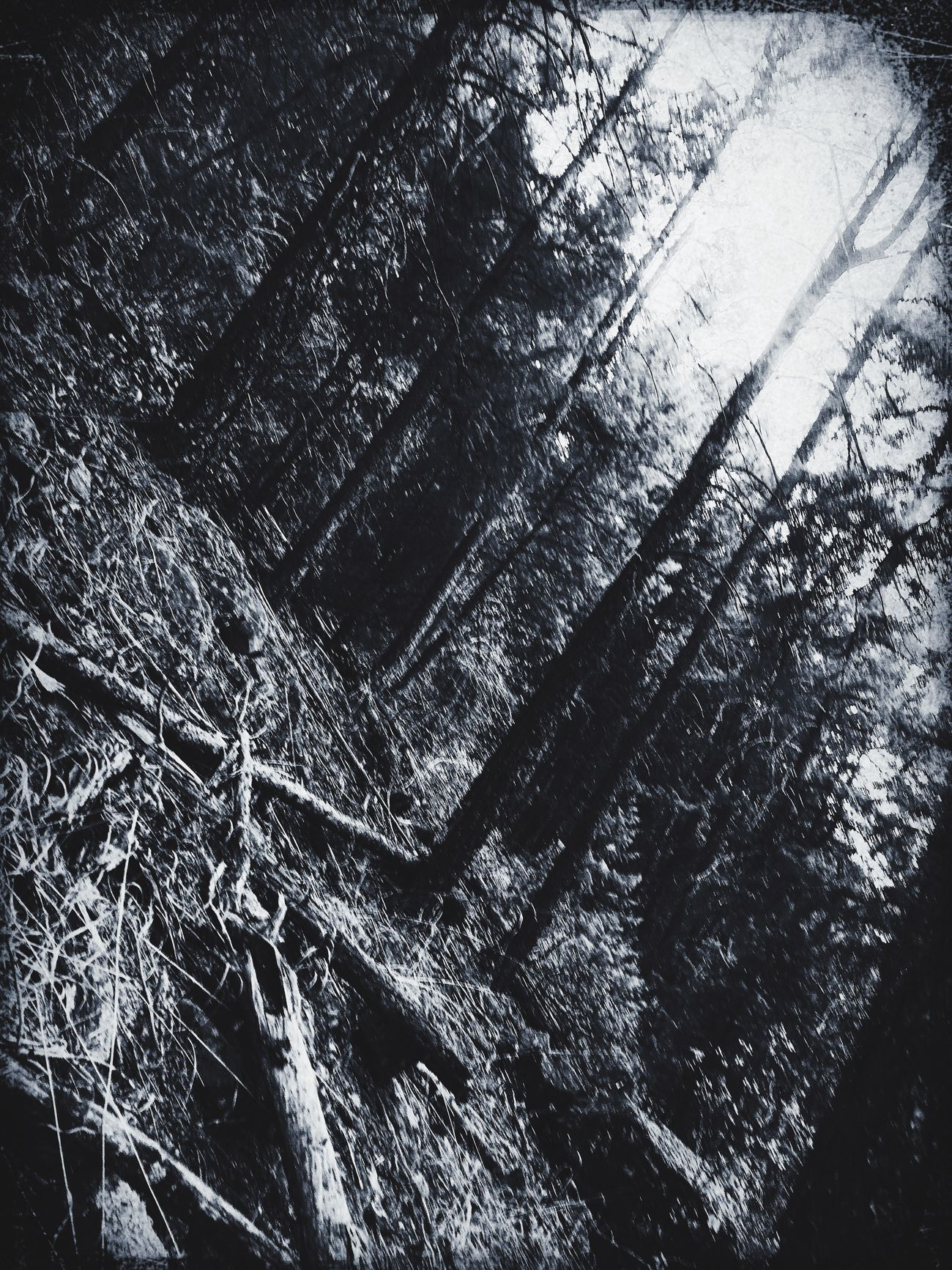 Horror Forest Denver,CO Lookout Mountain Blackandwhite Outdoors Nature Tree