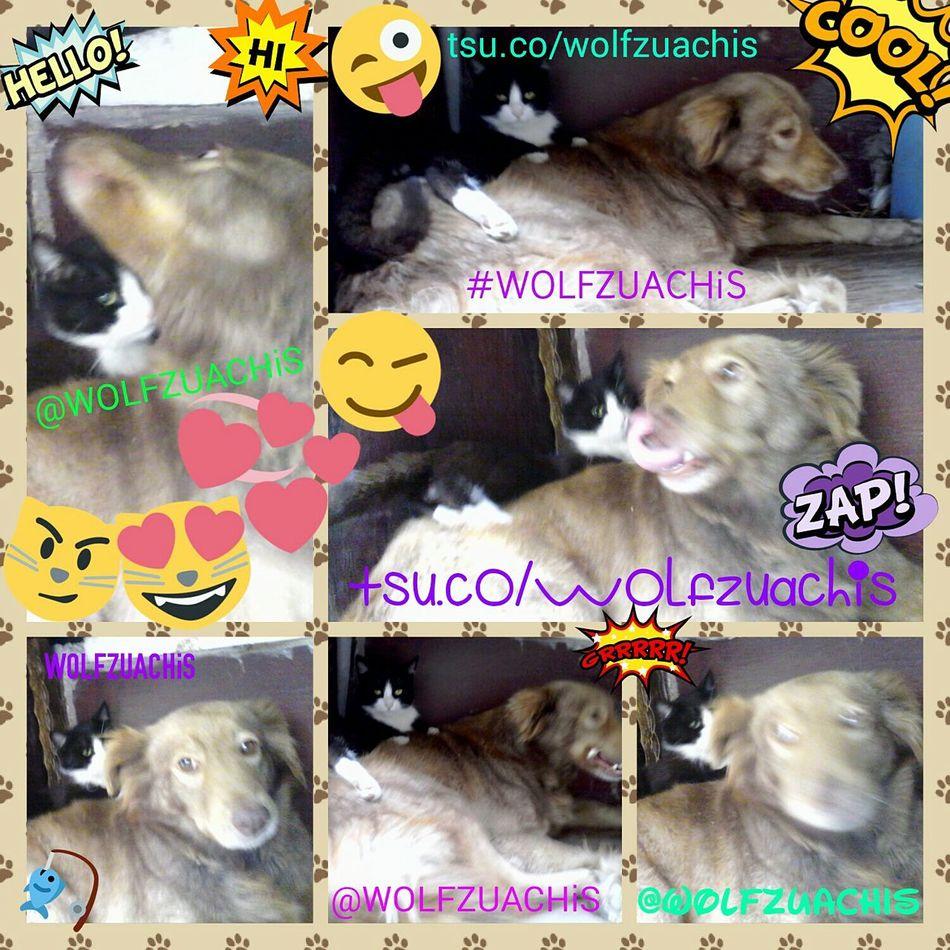 Wolfzuachis Collage Colaj