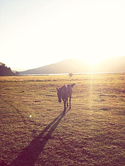 Hello World Enjoying The Sun EyeEm Nature Lover Horse