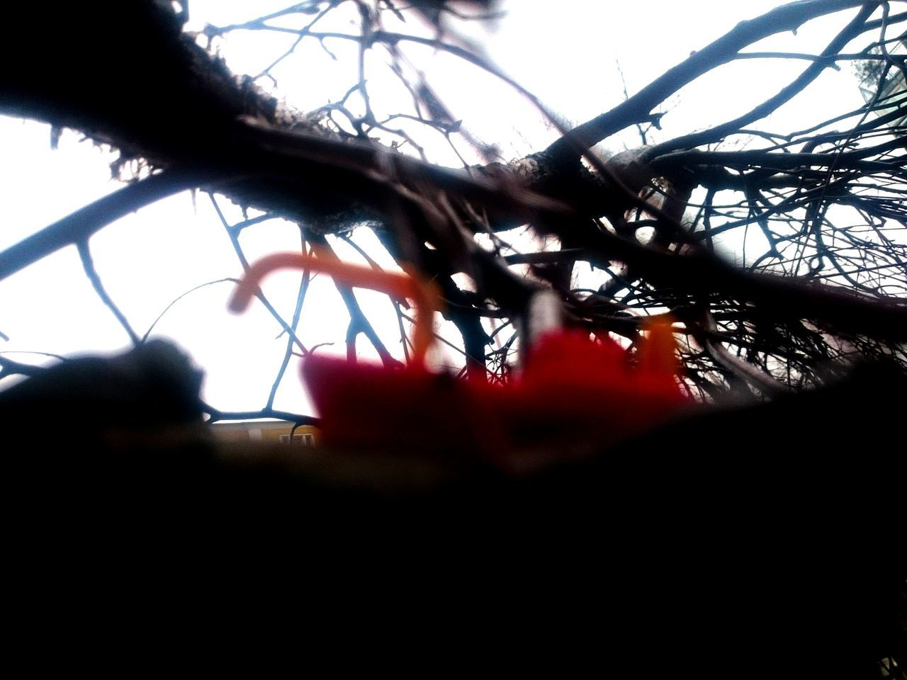 Close-up Tree Outdoors Fotos Quantum Red Yellow Toyship Toy Adventures Toyships Adventures No People Outdoor Rain Streetphotography Day