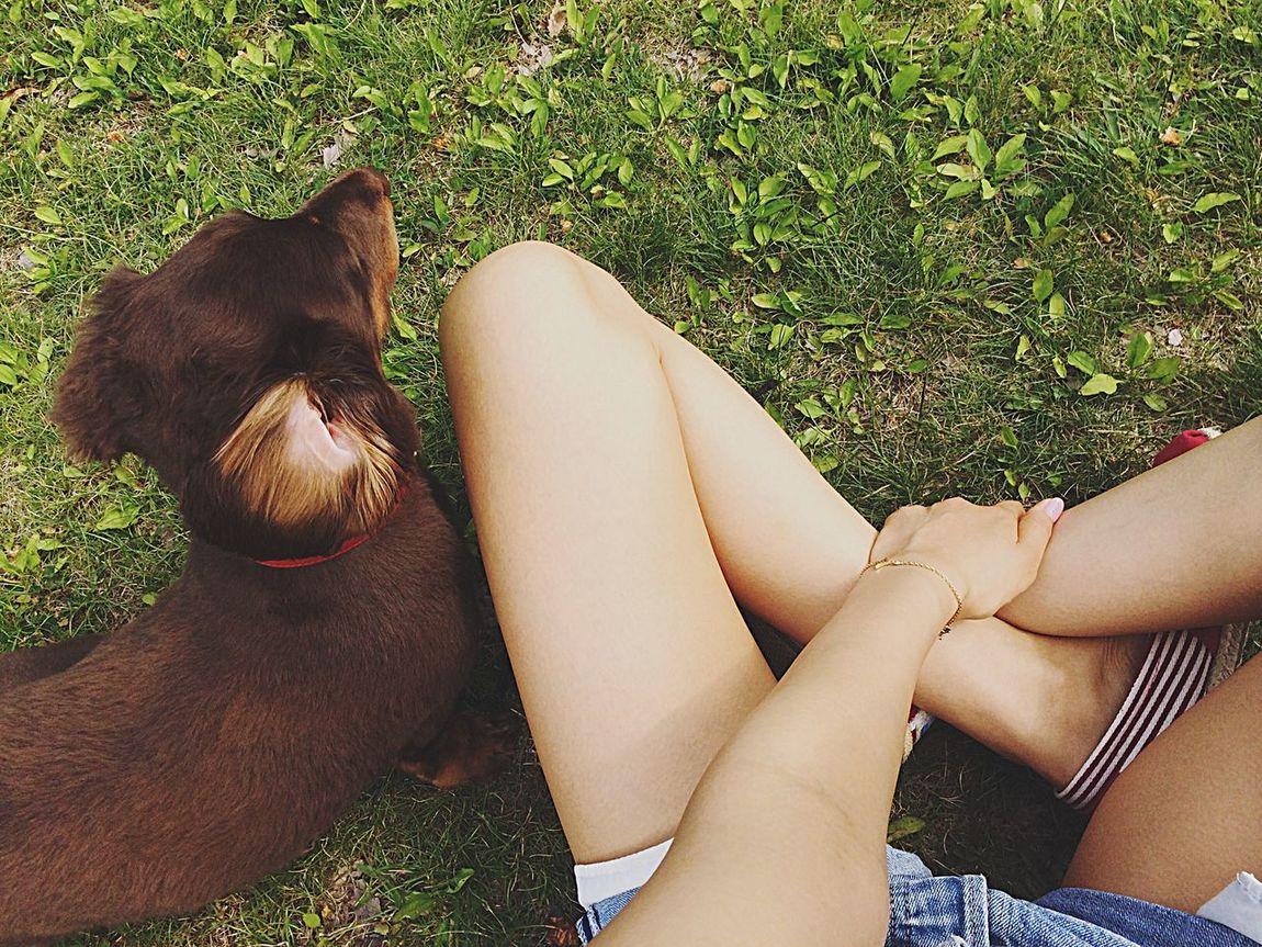 Cheese! Dog Dogs Dog Love Dachshund Mydog Cute Love Kid Special 愛犬 ミニチュアダックス ダックス チョコタン 相棒 相方
