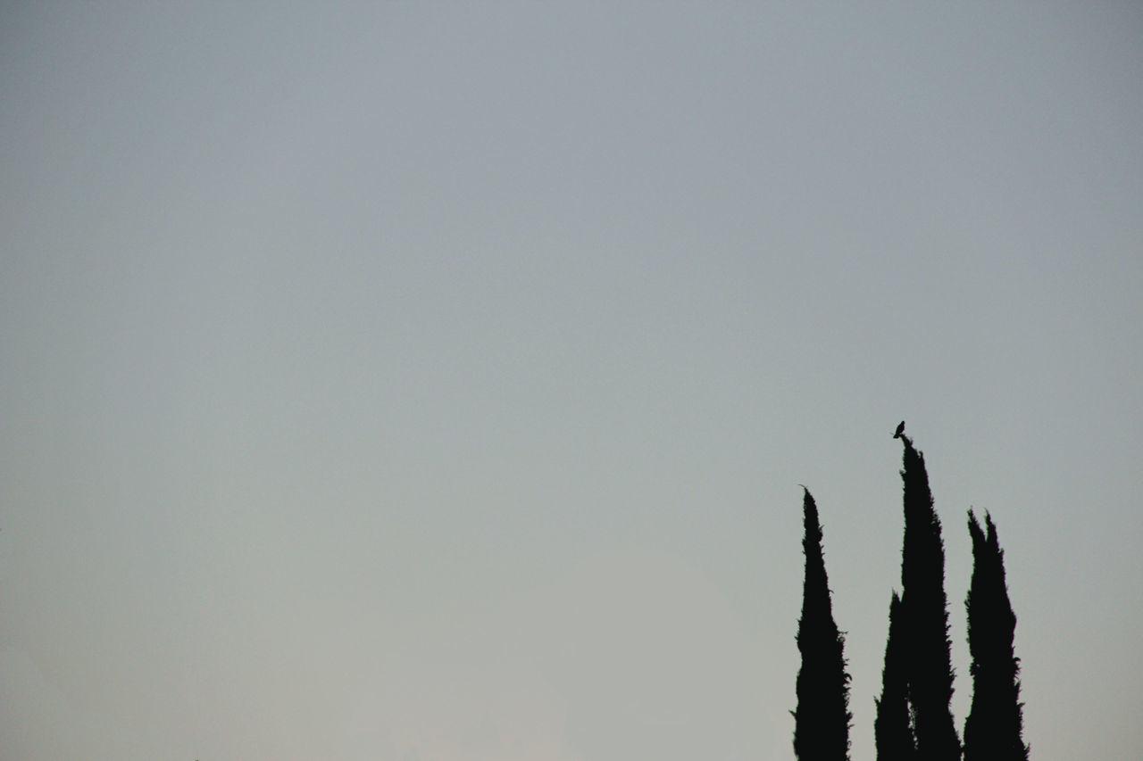 Bird Bird Photography Blue California Fly Sky Tranquility Tree