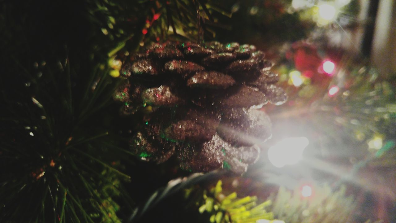 Christmas Tree Tree Christmas Illuminated Celebration Christmas Decoration Christmas Lights Christmas Ornament Tradition Night Close-up Holiday - Event No People Outdoors Needle - Plant Part Branch Nature The City Light EyeEmNewHere Christmas Lights Light Effect Shiny Hanging Christmas Acorn