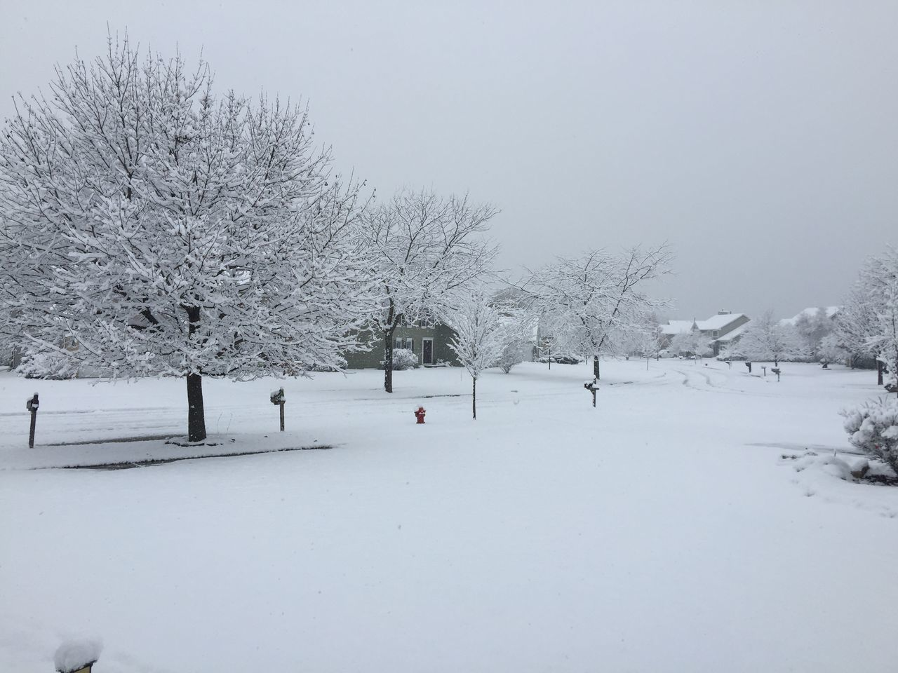 First Snowfall Snow ❄ Snowing ❄ Snowing Again Black And White Photography Winter Sky Winter Wonderland Winter Trees Oswego, IL United States Landscape Landscape_Collection Landscape_photography Nature Beauty In Nature
