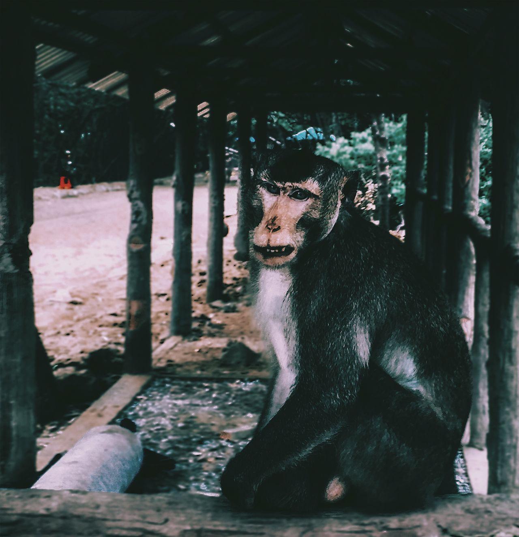 // 🐒 // AMPt Community AMPt_community Animal Themes Day Emoji Emojisinthewild EyeEm EyeEm Best Shots Eyes Feline Indoors  Lines Mammal Monkey Monkeys No People One Animal Portrait Vietnam Vietnamphotography