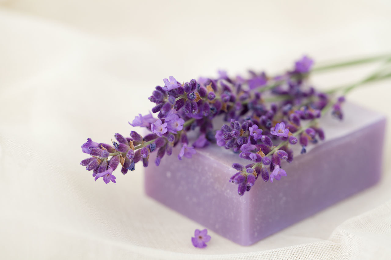 Lavender soap bar and bloom Aromatherapy Wellness Beauty In Nature Close-up Day Flower Flower Head Fragility Fragrant Freshness Healthy Lifestyle Indoors  Lavender Nature No People Odor Petal Purple Smell Soap Soap Bar Spa Studio Shot White Background White Backround