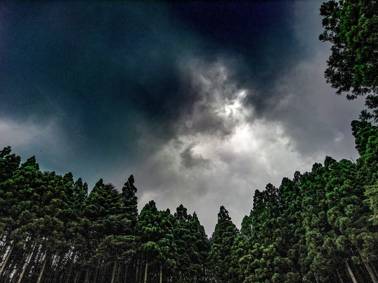 tree, sky, low angle view, nature, beauty in nature, growth, cloud - sky, no people, scenics, tranquility, day, outdoors, green color, storm cloud