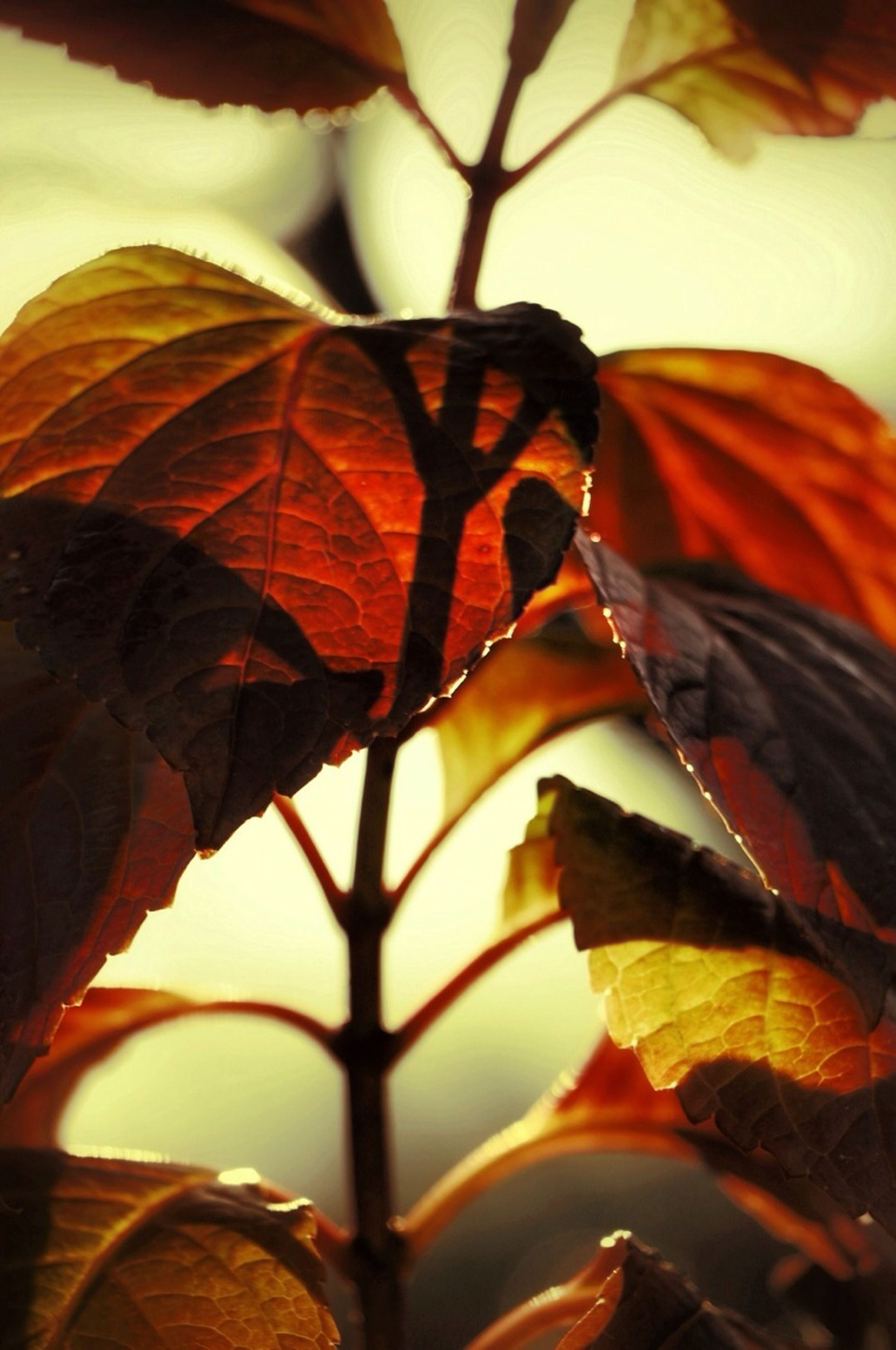 leaf, orange color, close-up, low angle view, branch, leaf vein, autumn, nature, focus on foreground, change, natural pattern, beauty in nature, sky, leaves, no people, sunlight, outdoors, tree, day, twig