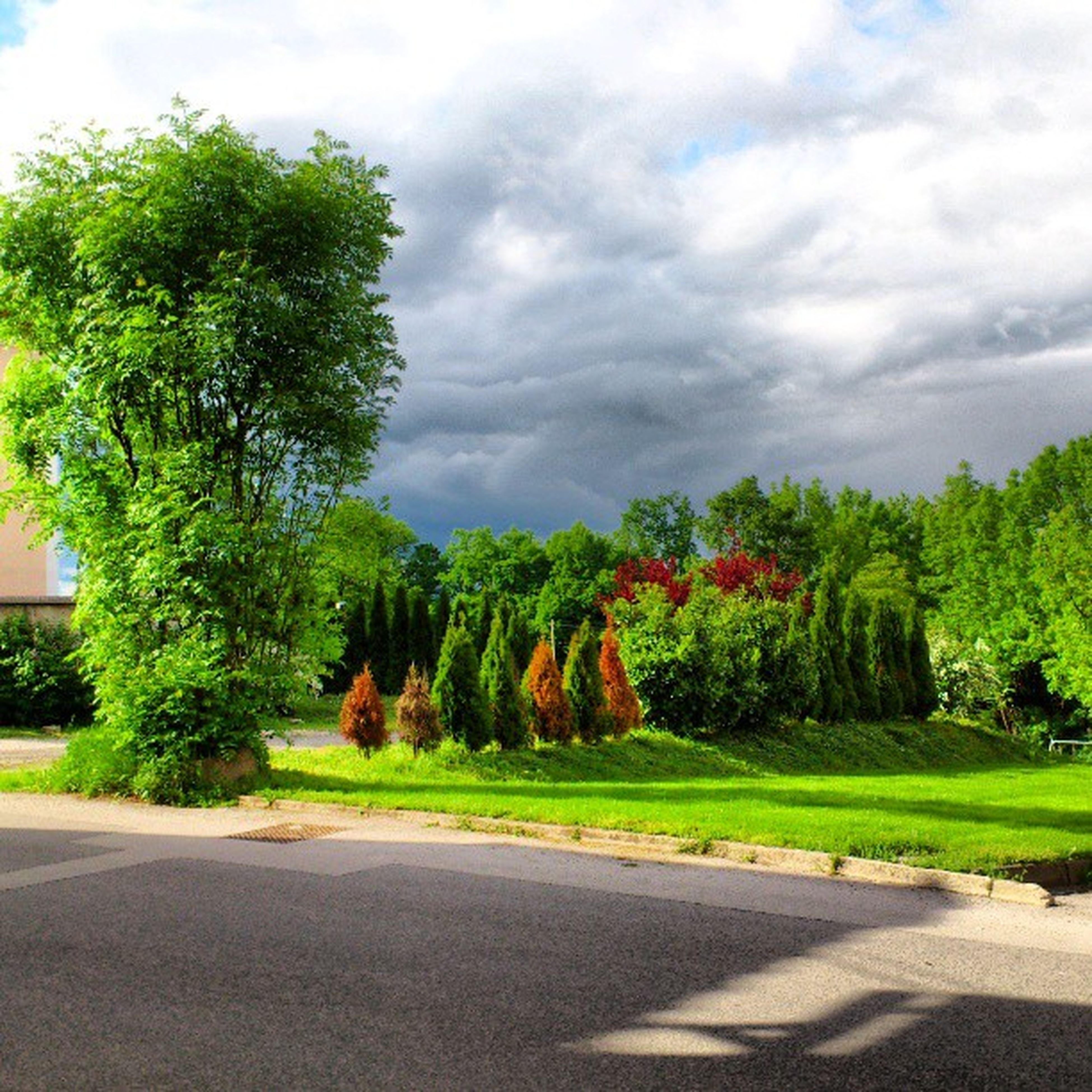 tree, road, the way forward, sky, street, cloud - sky, transportation, road marking, cloudy, growth, nature, empty road, diminishing perspective, cloud, tranquility, asphalt, tranquil scene, outdoors, day, vanishing point