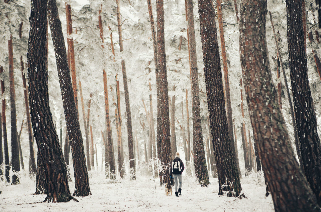 Beauty In Nature Cold Temperature Day Dog Forest Girl Landscape Nature Outdoors People Pine Pine Tree Plant Snow Snow ❄ Tranquil Scene Tranquility Travel Traveling Tree Tree Trunk Walking Around Wanderlust Winter Women