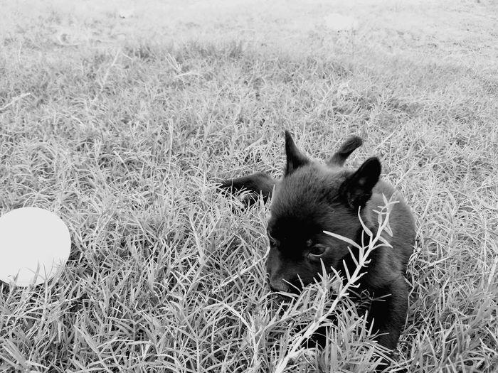 First Eyeem Photo Dog Blackandwhite Bw