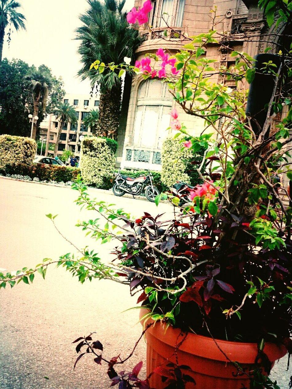 Hello World Mobilephotography Taking Photos Mobileshot ASU Natural Cairo Egypt Nice Day ^_^