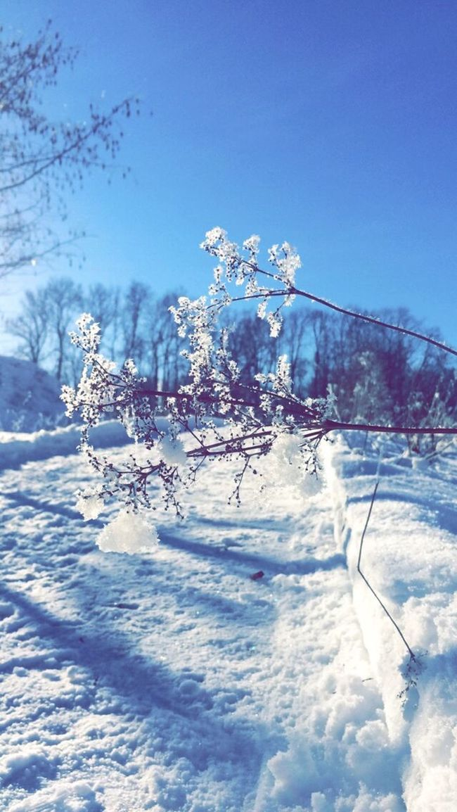 Norway Winter Winterwonderland Snow Bærum Tanum Tanumgård