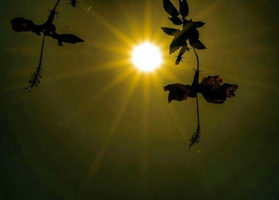 If you want to shine line like a sun, first burn like a sun! Sun First Eyeem Photo People Sky No People Flowers Sunset Day Reflection Phoyography Photooftheday Hibiscus 🌺 Photographer