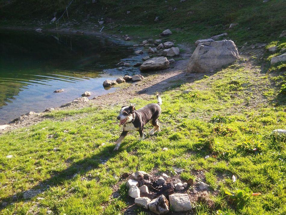 Switzlerland Mountains Nature Green Nature 🌞🌞☁☁⛅⛅ Dogs Of EyeEm