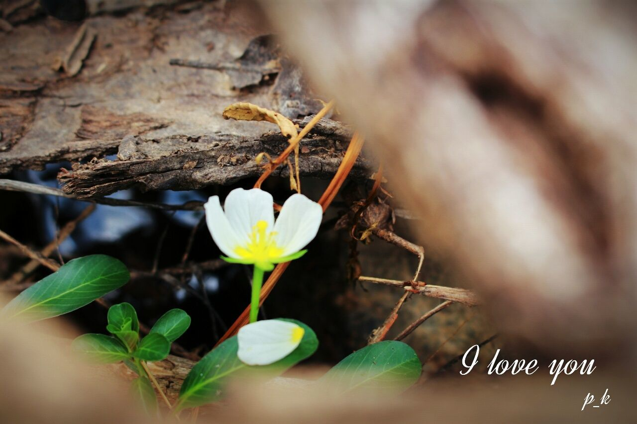 growth, nature, fragility, plant, flower, beauty in nature, leaf, selective focus, close-up, no people, freshness, day, outdoors, flower head