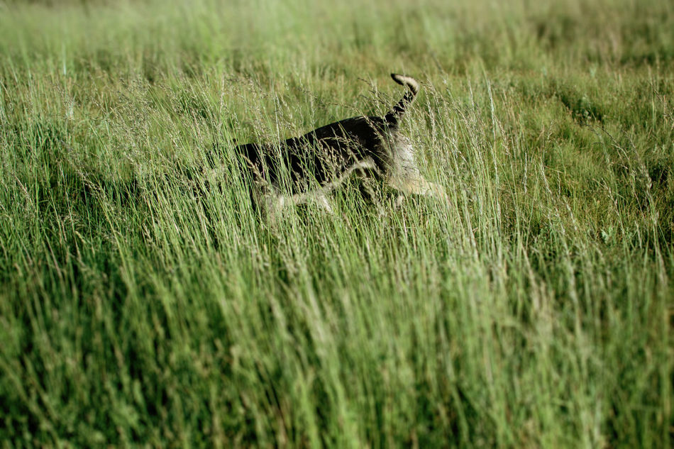 Animal Animal Themes Animals Day Dog Field Grass Green Color Growth Nature No People One Animal Outdoors Pets Street