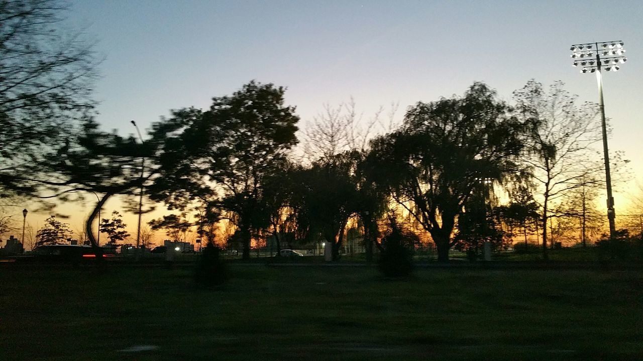 tree, nature, growth, beauty in nature, grass, outdoors, tranquility, sunset, no people, scenics, clear sky, sky, day