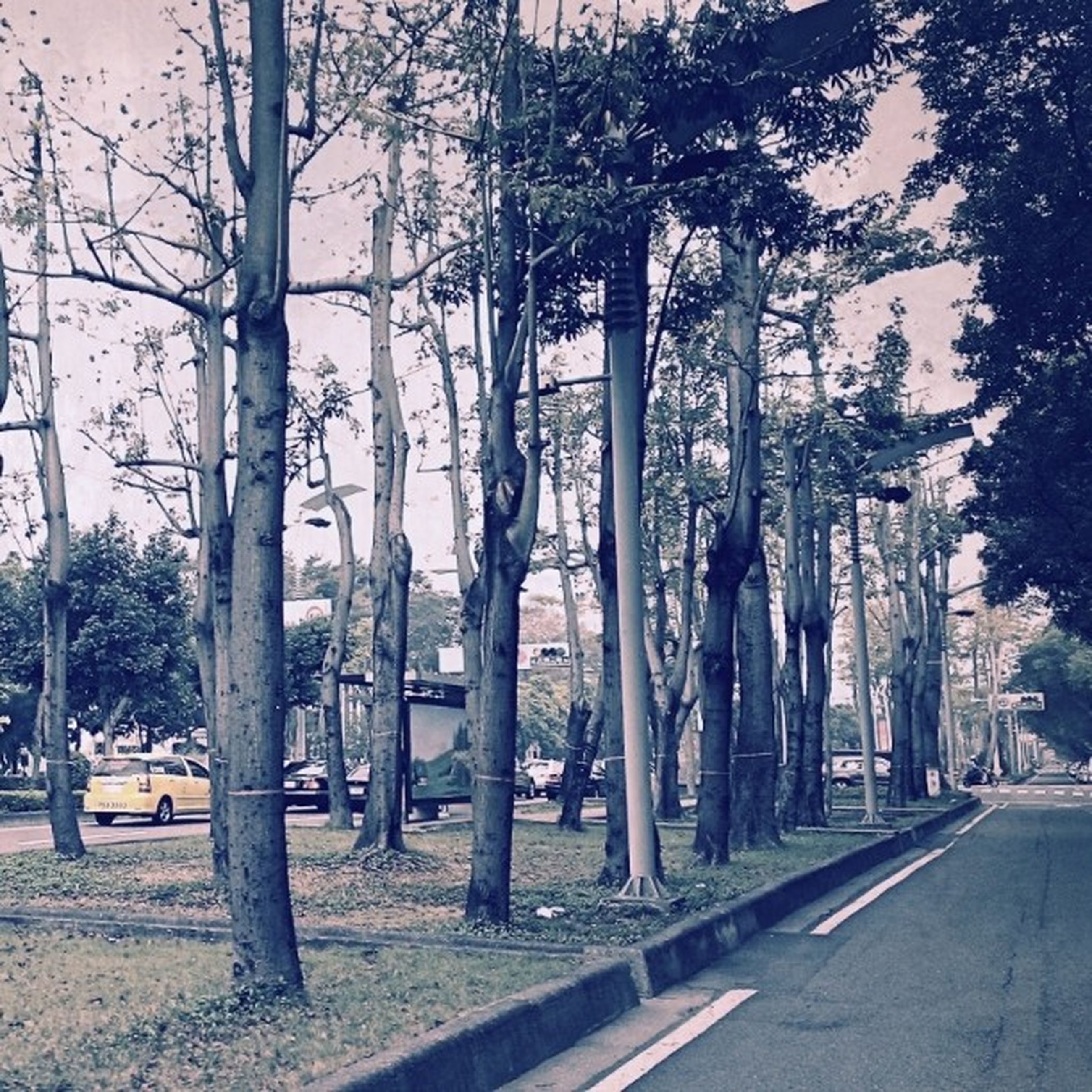 tree, road, transportation, street, tree trunk, treelined, built structure, city, building exterior, architecture, street light, the way forward, incidental people, day, outdoors, growth, in a row, sidewalk, car, bare tree