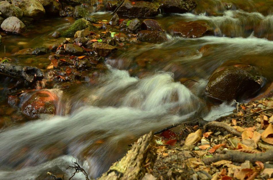 Sapanca Lake Lakeside Autumn Sonbahar Nature Tabiat Parkı National Forrest Check This Out Yellow Leafs