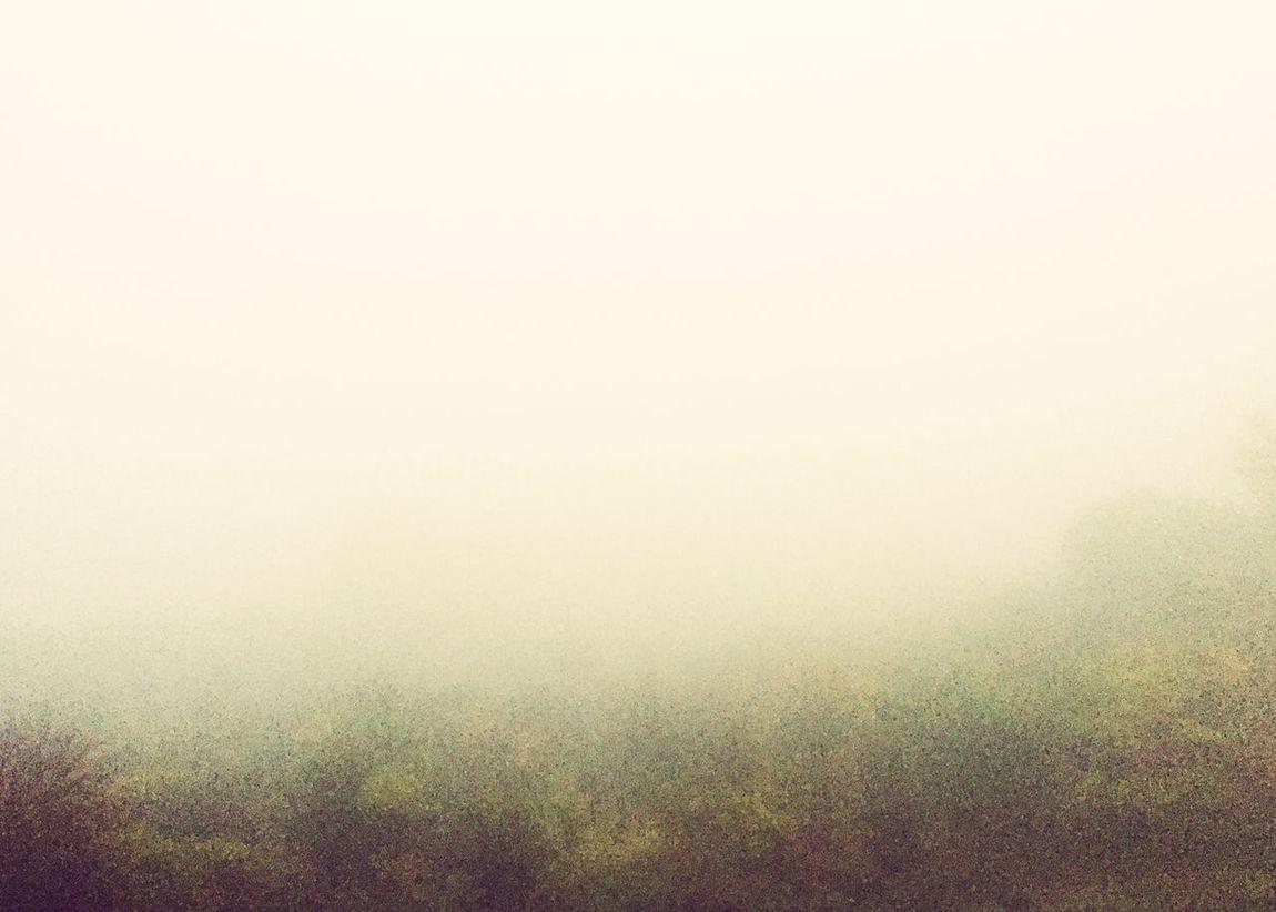 Fog Mgła Cantsee