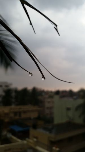 Taking Photos Check This Out Raindrops Rainy Days Coconut Trees Droplets The World In A Drop