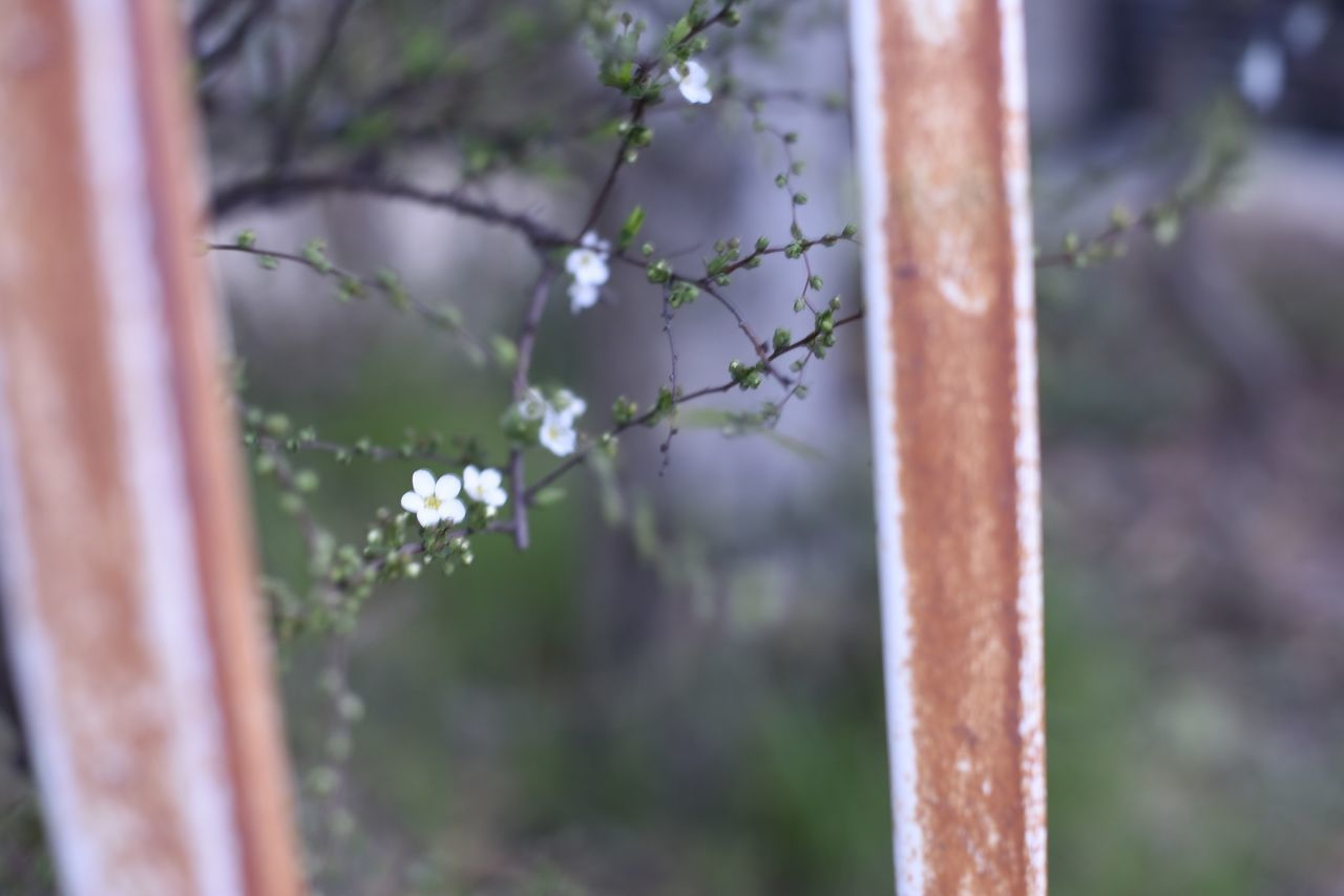 focus on foreground, day, no people, growth, plant, outdoors, close-up, nature, fragility, flower, freshness