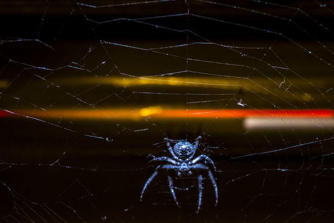 Focus On Foreground Nature Night Animals Night Lights No People Spider In The City Spider Web Web