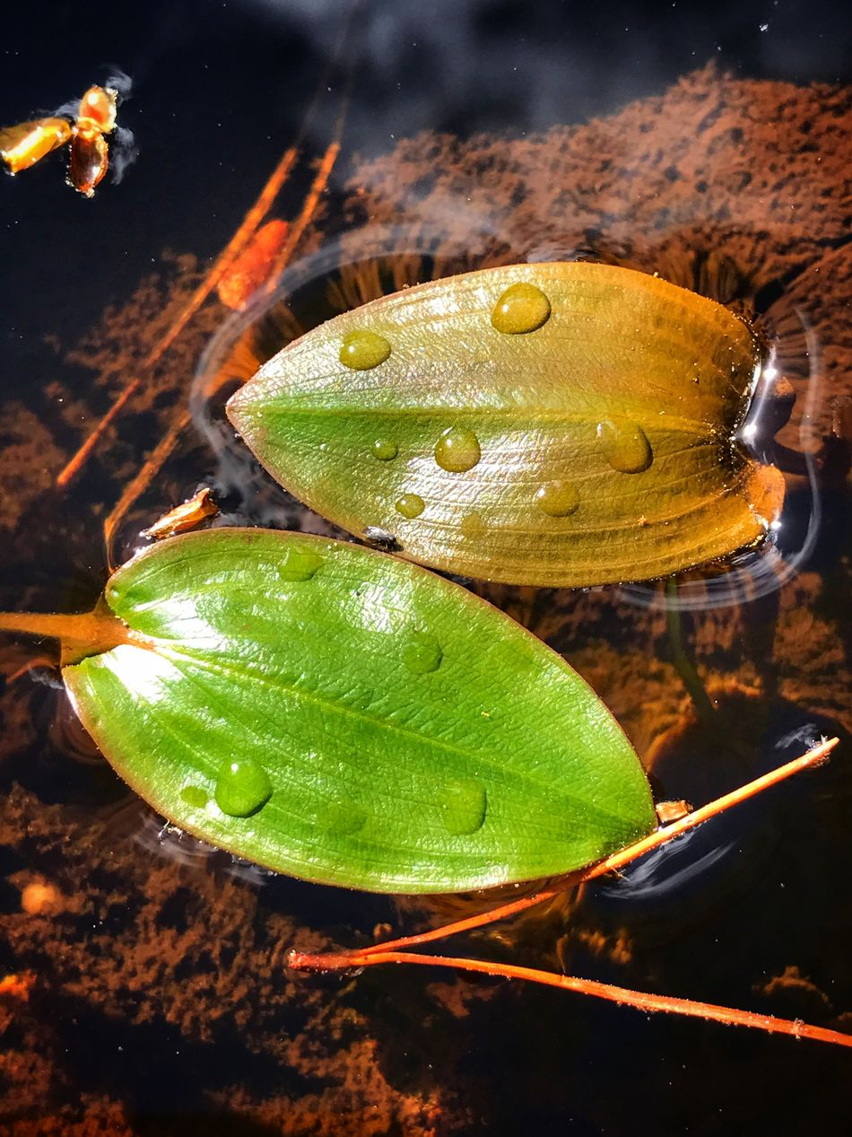Water Nature Leaf Close-up Drop Growth No People Beauty In Nature Plant Outdoors Lily Pad Night Fragility Animal Themes Freshness Surface Tension