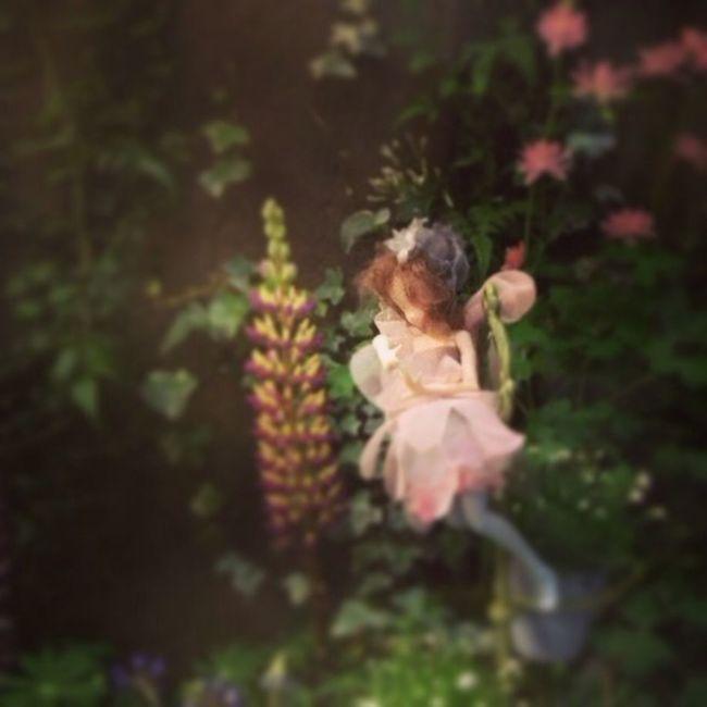 Fairy Showcase