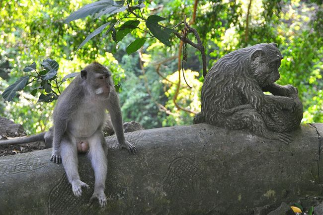 Wild monkey near the monkey forest in Bali, Indonesia Monkey Find The Difference Monkey Business Wild Monkey Showcase May Bali, Indonesia INDONESIA Vacation Forest Travel Animals Animal Photography Animals In The Wild Hindu God Nature At Its Best Nature Nature Photography Find The Differences