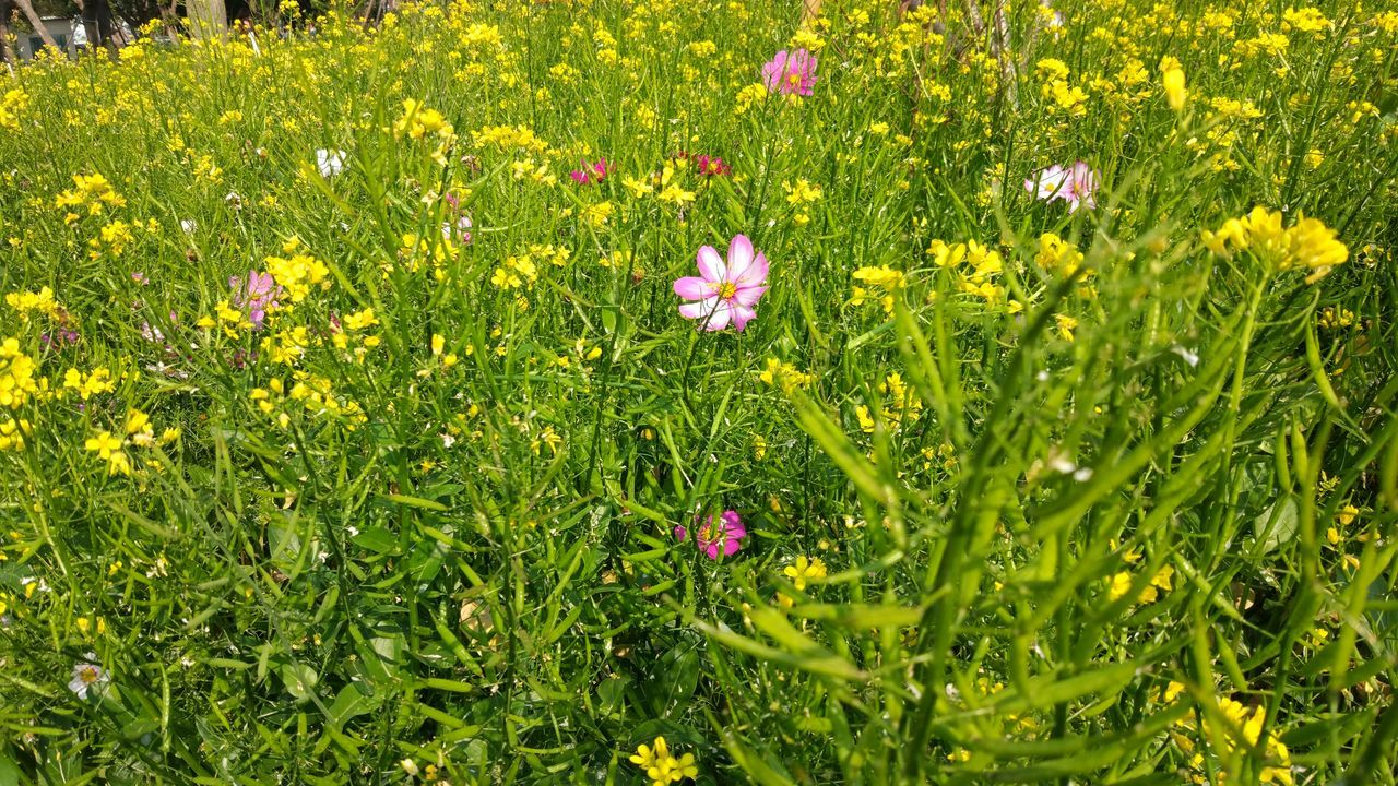 Flower Growth Grass Nature Beauty In Nature No People Flower Head Yellow Beauty In Nature Blooming Freshness Petal MIphotography Outdoors Freshness Fragility No Edit/no Filter