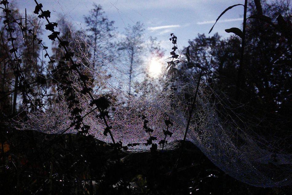 Beautiful Nature Spiderweb Nature Garden