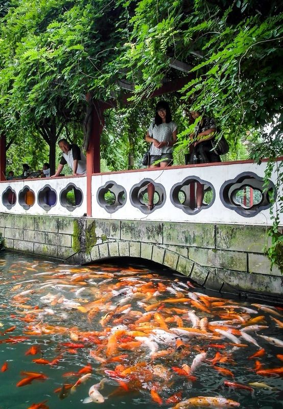 fish Chengdu china by PascalK