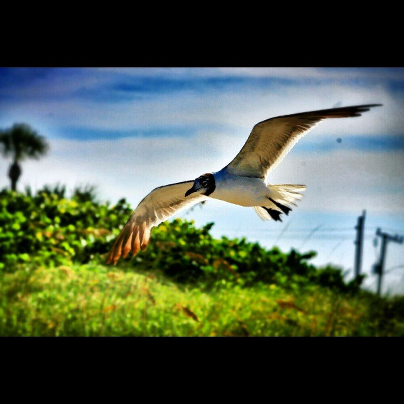 Instalike Instagood Picoftheday Seagull Florida Cocoa beach TFlers tbt awesome badass trill hdr canon accidental shot
