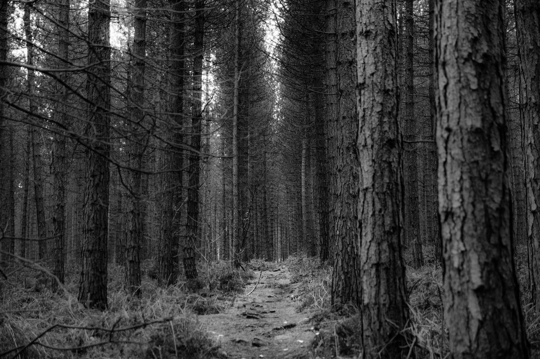 A lonely footpath through Grenoside woods in Sheffield, England. Black And White Cold Dirt Road Forest Landscape Lonely Mystery Narrow Nature No People Old Outdoors Remote Rough Symmetry The Way Forward Travel Tree WoodLand Woods Landscapes With WhiteWall