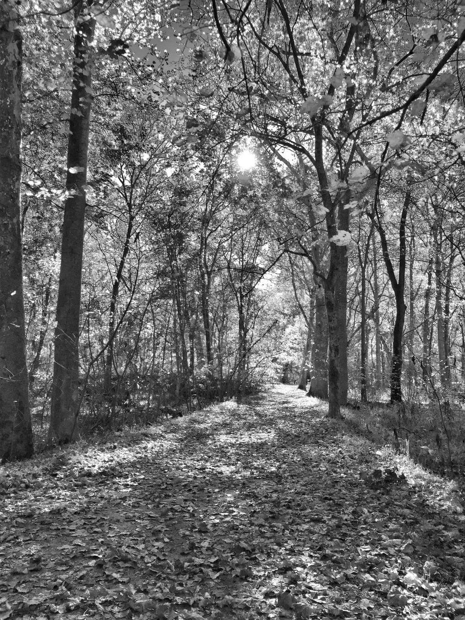 Autumn IPhoneography Sunrise Black And White Monochrome Trees Autumn Leaves Blackandwhite