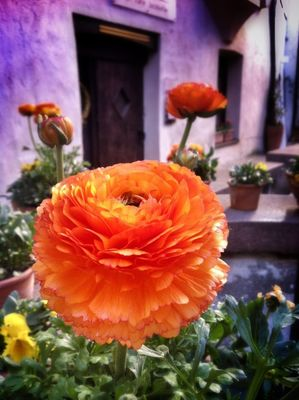 flowers at Domplatz / Piazza Duomo by Kriz