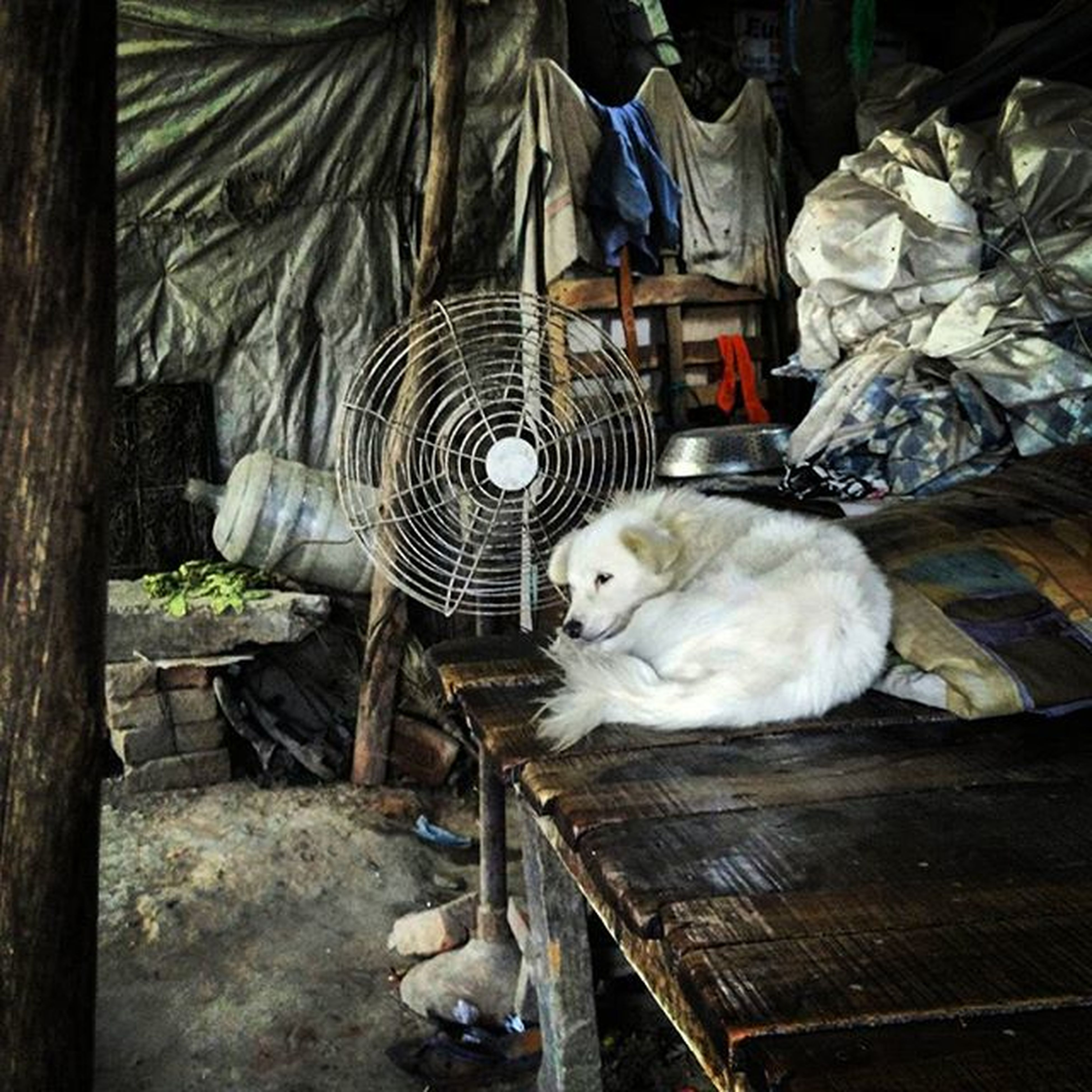 domestic animals, animal themes, pets, mammal, one animal, indoors, cat, domestic cat, relaxation, white color, sleeping, full length, no people, wood - material, high angle view, day, resting, feline, sitting