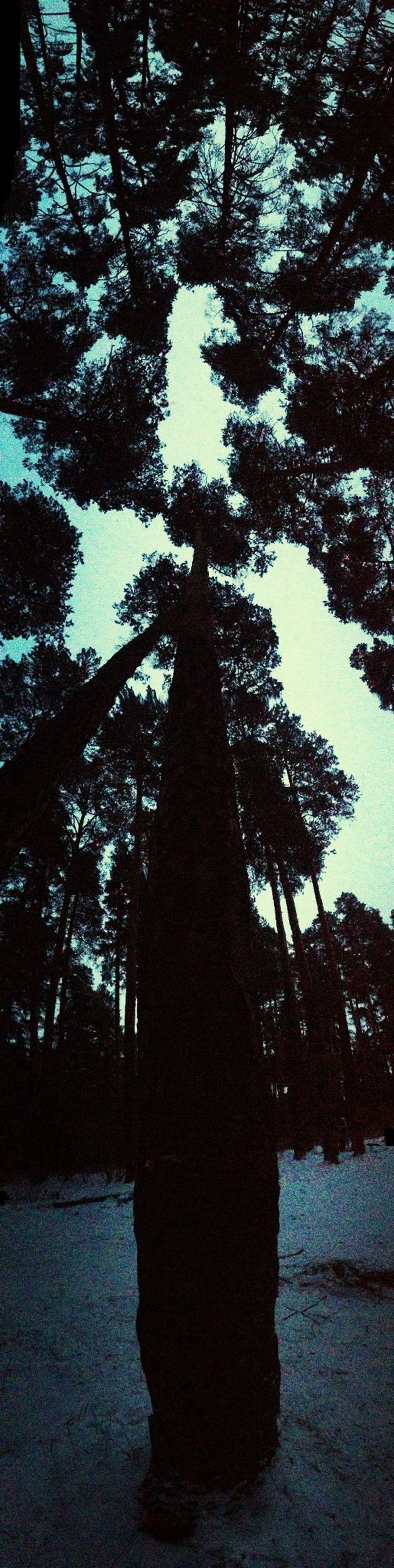 парк небо в екатеринбурге дерево