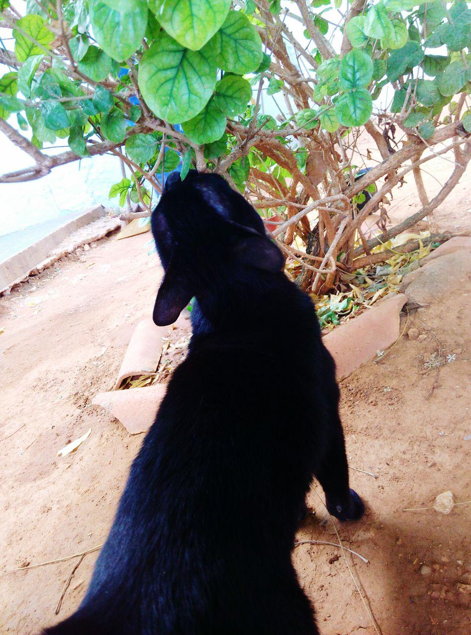 Cat🐈 Domestic Animals Beautiful Day Animal Love Animalphotography Nature Black Cats Are Beautiful