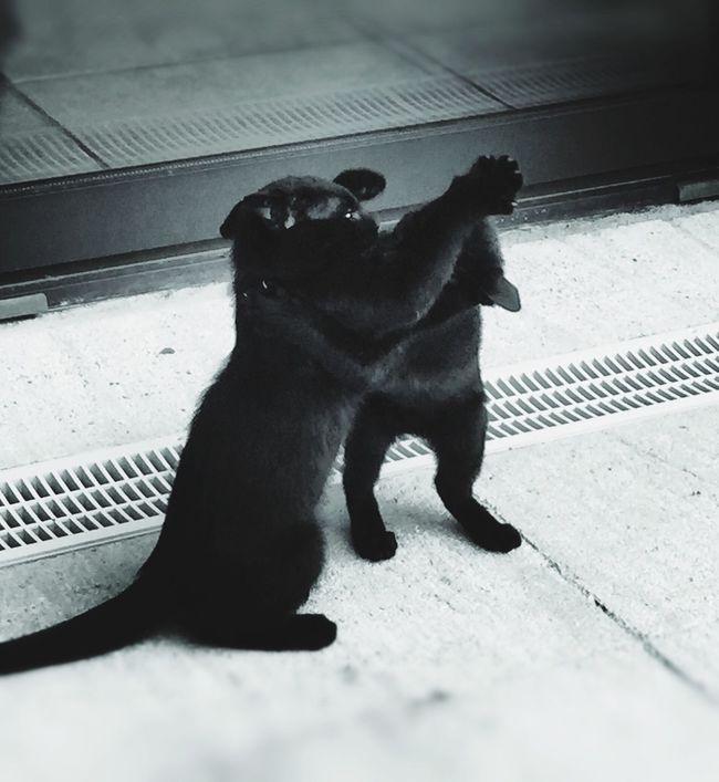 BLackCat I ❤️cat Kitten Demoncat how to impress my sister when she is boring me ?