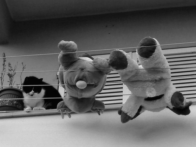 Scoprilintruso Scopri L'intruso Gatto😸 Gato Gatti