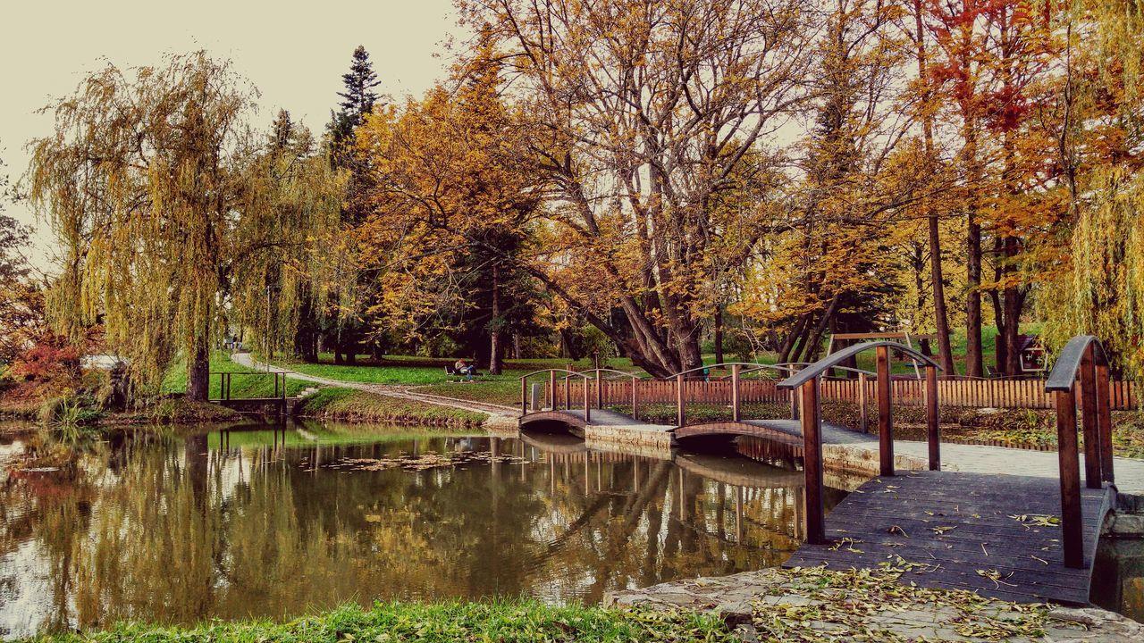 Showcase: November Relaxing Fall Autumn Leaves First Eyeem Photo 🍁