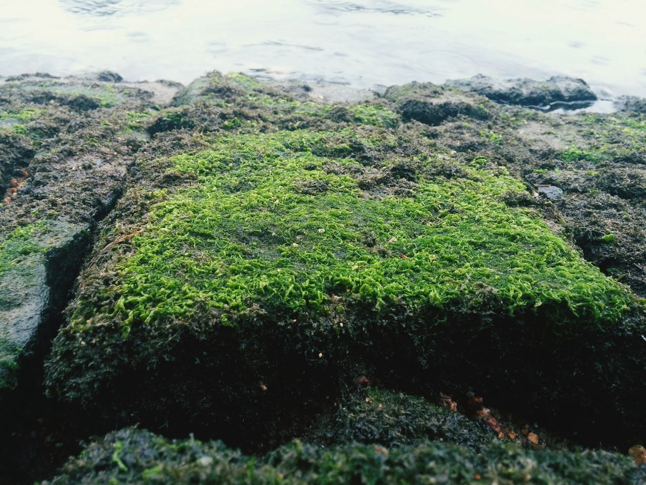 nature, water, no people, moss, high angle view, day, outdoors, green color, tranquility, beauty in nature, algae, growth, close-up