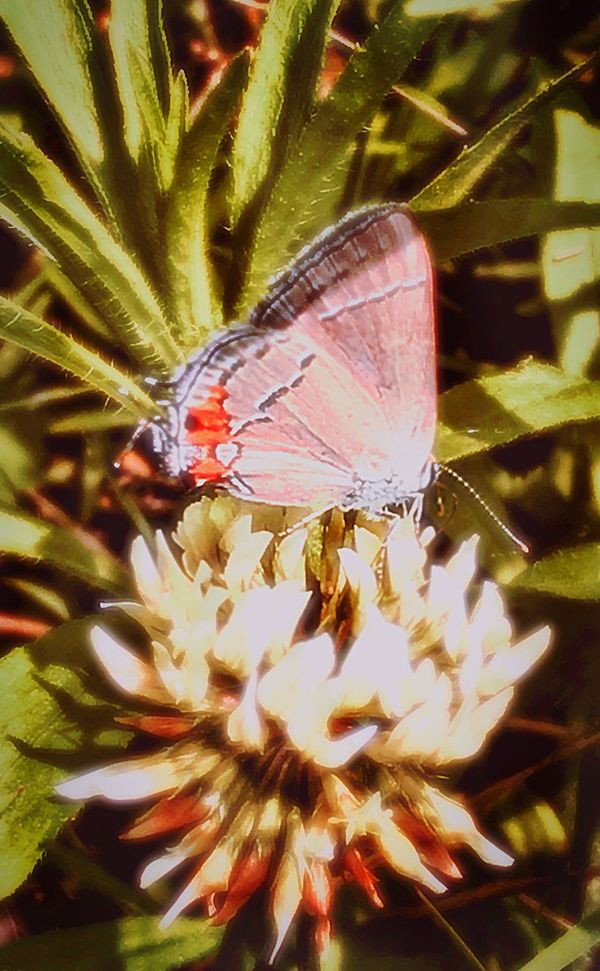 Nature's Diversities The Great Outdoors - 2016 EyeEm Awards Butterfly Butterflies Animal Kingdom Insect Insect_perfection Insects Collection Insects  Insect Photography CIRCLE Of LIFE Life Force Life Country Life The Wild The Resilient Nature Diversities Macro Macro Photography Macro_collection Macro Beauty Macro Nature EyeEm Gallery EyeEm Nature Lover EyeEm