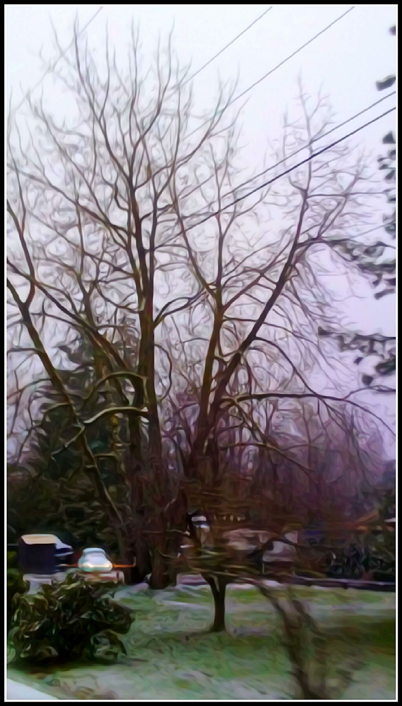 Its Begining To Look A Lot Like CHRISTMAS Slug Bug Branch Nature Bare Tree Built Structure Outdoors Tranquility Beauty In Nature Architecture Oregon Girl Oregon Explored Original Photography For The Love Of Art The Way Forward Cold Temperature Variation Landscape Idyllic Fragility Focus On Foreground My Year My View Waiting Game Cellphone Photography Artistic Perception