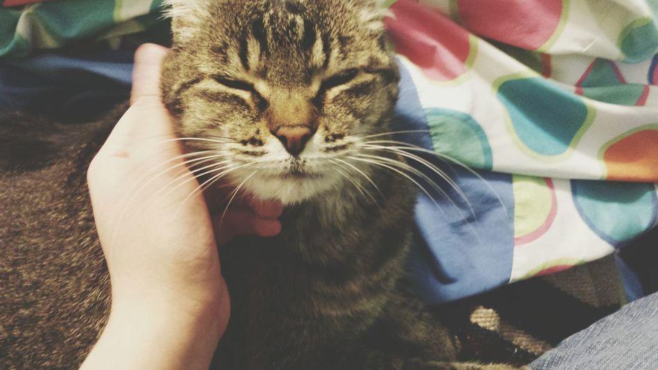 Happy Cat Tabby