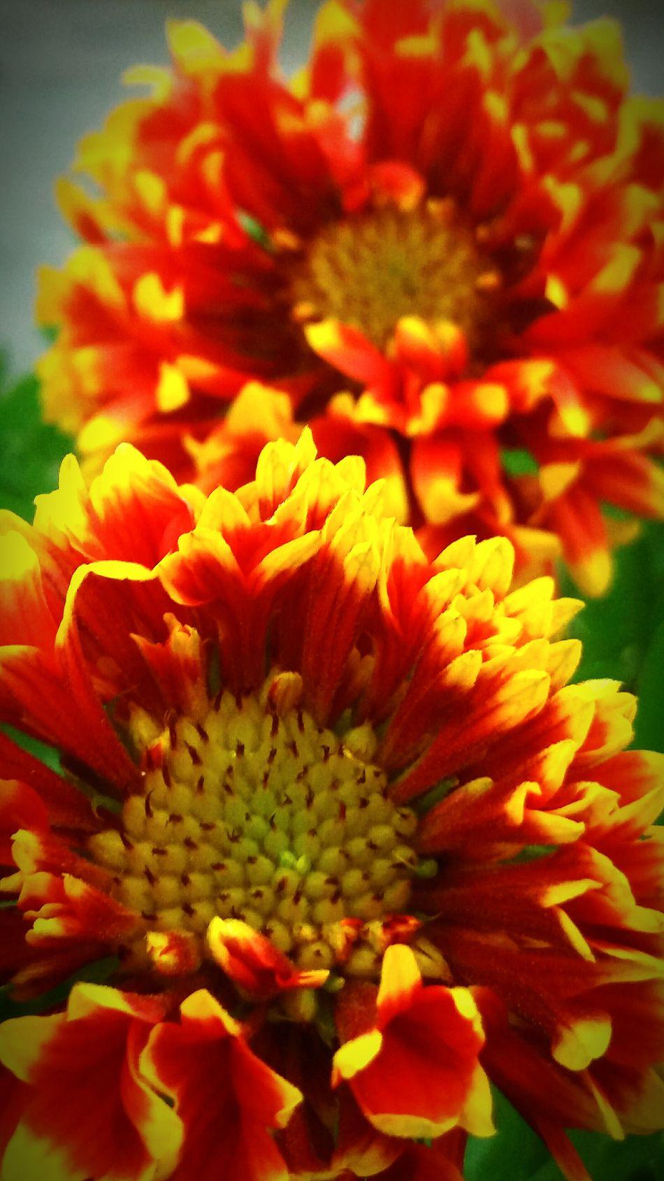 The Fiery Flower... First Eyeem Photo