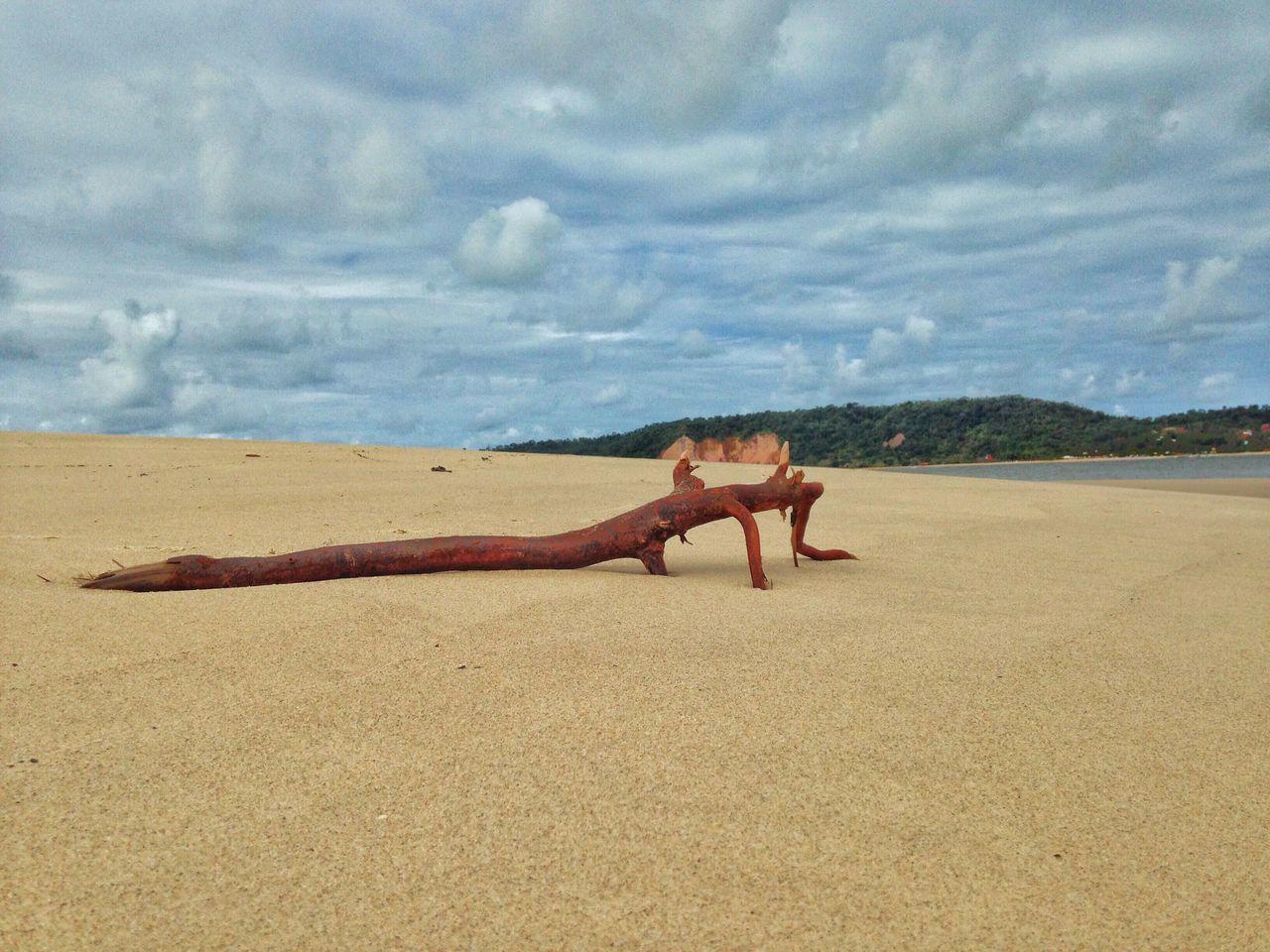 Like a lizard! Sand Beach Sky Cloud - Sky Nature Outdoors Day Beauty In Nature Bahia/brazil Tropical